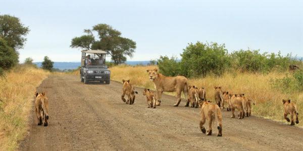 Best African Safari & Wildlife Tours - Wild Wings Safaris