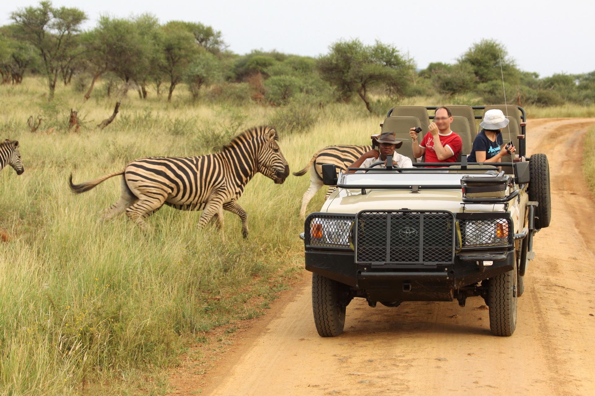 Comparing Safaris Before You Buy